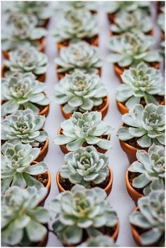 Succulent Wedding Reception Decor // The Wedgewood Tapestry House Wedding    Fort Collins Wedding Photographer, Breckenridge Wedding Photographer, Summit County Wedding Photographer, Estes Park Wedding Photographer, Summer Wedding, Aspen Wedding, Vail Wedding Photographer, Mountain Elopement Photographer, Colorado Wedding Photographer, Northern Colorado Wedding, Spring Wedding, Rocky Mountain National Park Wedding, RMNP Wedding, RMNP Elopement, Colorado Mountain Wedding
