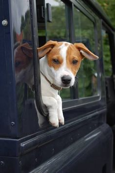 Land Rover & Jack Russell Terrier.....