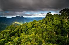 Rain Forest, New South Wales