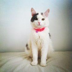 miyukimilk:  more CATS♡