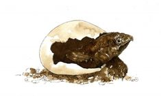 """The Outside Story: """"A Slow Start for Snapping Turtles,"""" by Brett Amy Thelen. Illustration by Adelaide Tyrol. """"One moonless May evening, my husband and I walked down to our local pond, flashlights in hand, to look for toads. We were delighted to discover hundreds of them…"""""""