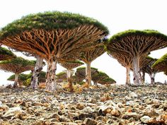 Socotra, Yemen Considered the biodiversity jewel of the Arabian Sea, the island of Socotra is home to some of the world's most incredible scenery. As one of the most isolated islands on earth, Socotra has developed its own bizarre species of plant life. From upside-down trees to five-foot stalactites, Socotra's scenery is equal parts an acid trip and a Salvador Dali painting. It's one of the few places on earth that could easily double for an alien planet.