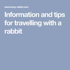 Information and tips for travelling with a rabbit