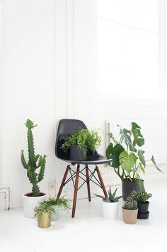 45 Ideas For Design Studio Green Life Home Interior, Interior Design Living Room, Interior Styling, Indoor Garden, Indoor Plants, Botanical Interior, Belle Plante, Decoration Plante, Studio Green