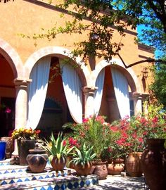 Succulents in pots, blue and white tiled steps and white curtains in the arches of the covered verandah. Orange stucco