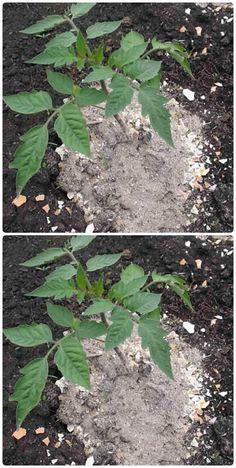 Plantar, Farm Gardens, Herb Garden, Gardening Tips, Fruit, Flowers, Outdoor, Decor, Gardens