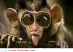 nice Try To Do This Funny Amazon Monkey - funny animals
