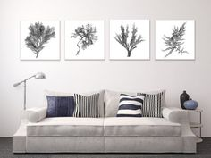 Large Canvas Wall Art Set Black And White Botanical Prints Of Seaweed Four Square Beach D