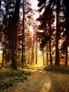 #Wandern im #Spessart    © Maulaff, de.wikipedia