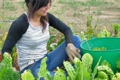 A first-timer's guide to WWOOF-ing