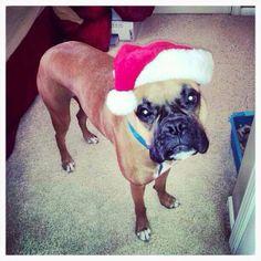 Santa boxer!