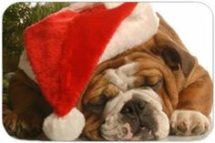 """Bulldog Christmas Tempered Large Cutting Board by Doggie of the Day. $39.99. Please allow 4 days to ship. Durable. 15.74"""" x 11.8"""" x 5/32"""". Dishwasher Safe. Spice up your kitchen with a fabulous cutting board! These cutting boards are perfect for home chef's and restaurant owner's alike. This is a specially coated glass cutting board that is durable and dishwasher-safe."""
