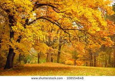 Autumn leaves Free Photos for free download about (1,084) Free Photos in jpg format . page (12/37)