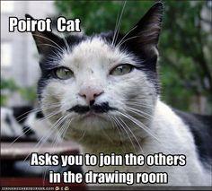 Poirot Cat - Cheezburger