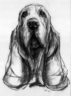 Dogs in Art at the StockBridge Gallery -  Basset Hound Charcoal Drawing by Justine Osborne, £195.00 (http://www.dogsinart.com/basset-hound-charcoal-drawing-by-justine-osborne/)