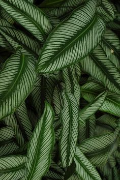 Tropical garden in Photography by Carlos Morra. Tropical garden in # Tropical Flowers, Tropical Leaves, Tropical Plants, Tropical Gardens, Leaf Photography, Plant Aesthetic, Flower Market, Green Plants, Indoor Plants