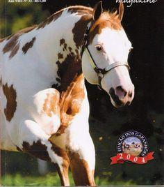 American Paint Horse, Appaloosa, Horse Breeds, Thoroughbred, Beautiful Horses, Cow, Painted Horses, Horror, Quarter Horses