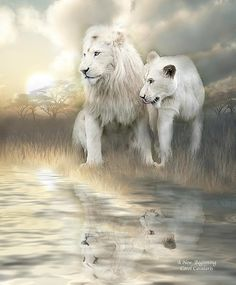 We come into this life With the glow of innocence And wonders never-ending If we are blessed We grow with the gift of wisdom And never lose hope for A new beginning.  A New Beginning prose by Carol Cavalaris  This painting of young male and female white lions, is from the Spirit Of The Wild - Big Cats collection of art by Carol Cavalaris.