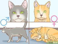 Das Geschlecht einer Katze bestimmen – wikiHow Cat Steps, Pikachu, Fictional Characters, Art, Newborn Kittens, Calico Cats, Vet Office, Leather Gloves, Art Background