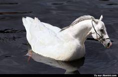 Akenini.com - Montage photo animaux - Hybrid Animals Photoshop