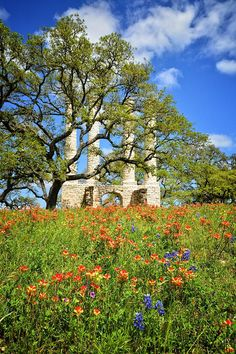 Springtime Ruins - Vertical by Lynn Bauer Lone Star State, Spring Time, Abandoned, Photograph, Texas, College, Wall Art, Travel, Beauty