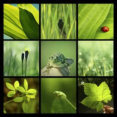 naturally green collage