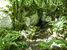 a hermitage for St Colman in the seventh century has become a local shrine or modern place of pilgrimage, resurrected from the mists of time Hidden Places, Pilgrimage, The Locals, Mists, Cave, Places To Visit, Fairy, Herbs, Tours