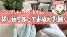 【多肉狩り】秋のホムセン多肉植物は一味違う!植え替えしながら挿し穂作り!これで寄植えの準備OK! - YouTube Succulent Care, Succulents, Youtube, Succulent Plants, Youtubers, Youtube Movies