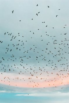 birds flying