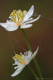 Wild Flowers and dew strands