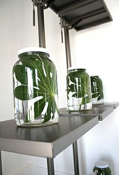 """Leaf in a Bottle"", pinned by Ton van der Veer"
