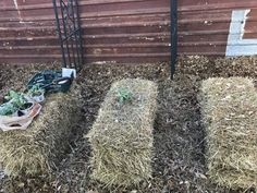 Are you ready to turn a straw bale into a garden? It's relatively easy and can yield a seriously impressive amount of homegrown food. Straw Bales, Hay Bales, Hay Bale Gardening, Dig Gardens, Roof Gardens, Sustainable Architecture, Residential Architecture, Contemporary Architecture, Compost Tea
