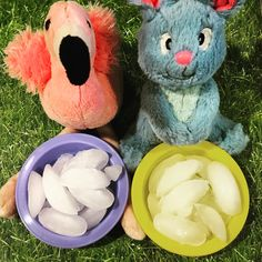 Bunny, It's Hot Outside! Heat Related Illnesses and How a Bunny Can Stay Cool this Summer!