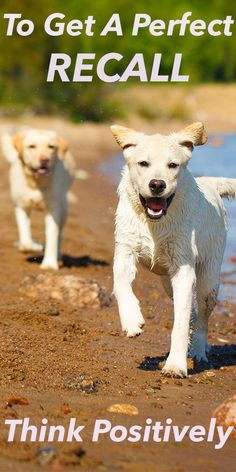 79f42fdad 2334 Best Animals & the Joy of Nature. We are blessed. images in ...