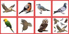 (2014-10) Fugle
