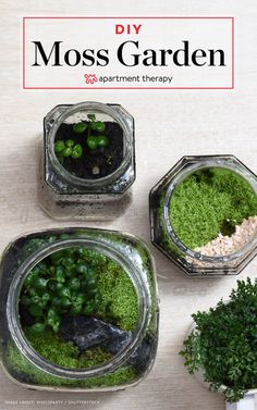 How To Grow Your Own Moss I love outdoor spaces filled with overgrown blooms, piles of mismatched pots, bits and bobs of weathered sculpture, and richly textured blankets of moss Garden Plants, Indoor Plants, House Plants, Air Plants, Potted Plants, Cactus Plants, Fruit Garden, Herb Garden, Organic Gardening