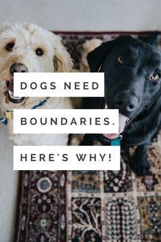 Boundaries are super helpful and you don't need to be permissive or overly strict to raise your dog! dog training | positive reinforcement | boundaries | relationships | love | force free | punishment | happy dogs | well trained dogs | rescue dogs