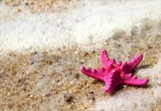 1a076298eb97c 24 best Beach Pinks images on Pinterest