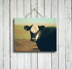 The Cow - 16x20 in. print - cow photograph - cow art - cow decor - country decor - blue and brown decor - cow photo. $60.00, via Etsy.