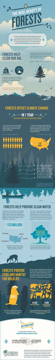 Real Beauty of Forests An Infographic from the National Forest Foundation Great info and stats for Cadettes working on the Trees badge the Real Beauty of Forests from t. Environmental Education, Environmental Science, Environmental Graphics, Rollup Design, Forest Plants, Visualisation, Sustainable Development, Trees To Plant, Tree Planting