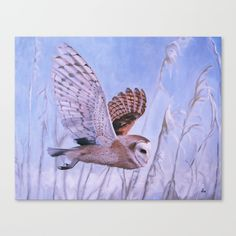 Widgeon Canvas Print