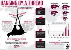 We're running ot of rhinos