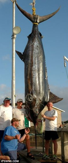 'Dream come true': Kevin Gardner said catching the majestic 1,320lb Blue Marlin…