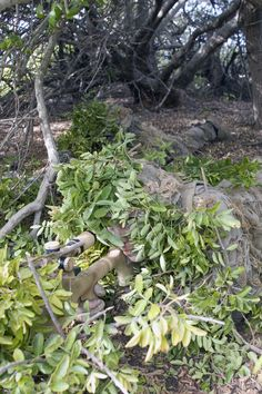I don't see him. Navy SEAL sniper focuses on the target. Special Ops, Special Forces, Sniper Camouflage, Navy Sister, Military Tactics, Airsoft Sniper, Us Navy Seals, Us Army, Armed Forces