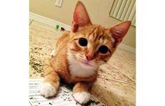 27 Hilarious Photos Of Cats Going Crazy On Catnip (Slide #4) - Pawsome