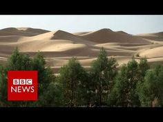 Eleven countries are planting a wall of trees from east to west across Africa, just under the southern edge of the Sahara desert. The goal is to fight the ef. Bbc News, Trees To Plant, Tree Planting, Soil Improvement, Climate Change Effects, Green Earth, Environmental Science, Global Warming, Construction