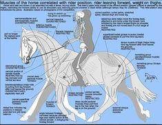 A quick graphic on the balance between you and your horse