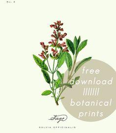 a daily something: Free Printable | Botanical Prints