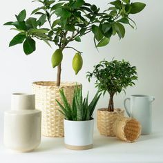 KAFFEBÖNA Plant pot, bamboo, Height: This pot is made by skilled craftspeople in a small village in Vietnam. We've chosen to use bamboo since it's a sustainable material with a light and natural wood look. Indoor Plant Pots, Green Decor, Ikea Catalog, Pot, Ikea, Bamboo In Pots, Potted Plants, Cache Pot, Indoor Plants