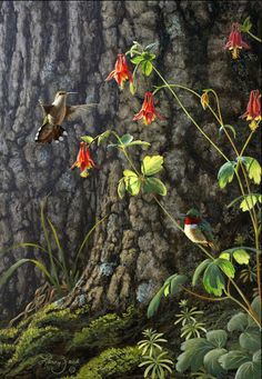 Ruby-Throat hummingbirds and Columbine - bird painting by Larry Zach